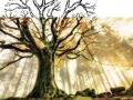 Petit écoute la nature-Biographie- Valerie Jean